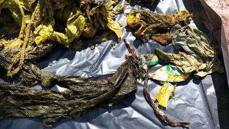 Sacos plásticos e restos de comida estão entre os itens encontrados