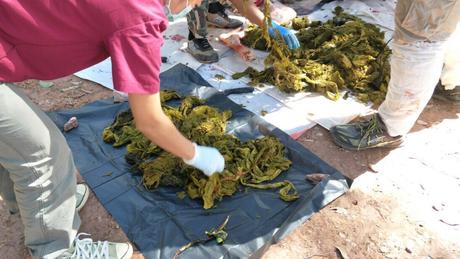 Cerca de 7 quilos de lixo foram encontrados dentro do estômago do animal