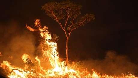 Voluntários trabalharam em parceria com Corpo de Bombeiros para apagar incêndios em Alter do Chão