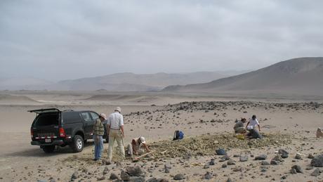 O fóssil foi encontrado nas rochas de Yumaque, na área desértica em frente à Praia Media Luna, na costa sul do Peru.