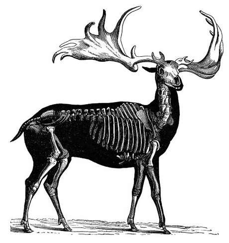 O animal extinto tinha cerca de dois metros de altura e presas que chegavam a 3,65m
