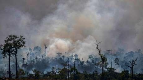 Brasil está sob crescente pressão internacional por causa do aumento do desmatamento