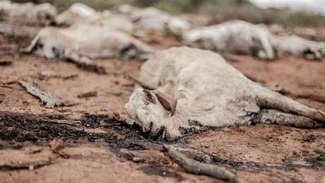 Seca no Quênia levou à morte de centenas de animais