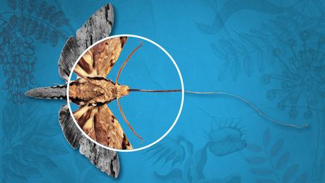 A curiosidade e a dedicação de Darwin culminaram em algumas previsões famosas - como, por exemplo, a da existência de uma espécie mariposa descoberta apenas décadas depois