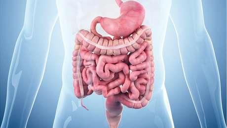 Nossos intestinos abrigam 90% dos nossos receptores de serotonina