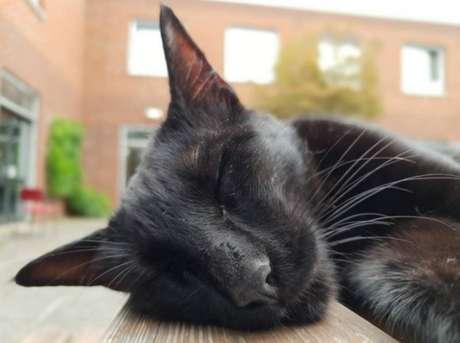 Aluno aplicado - Na Inglaterra, a Universidade de Warnick tem um aluno diferente: o gato Rolf. O felino até tem uma família de cuidadores, que já fez de tudo para impedi-lo de sair de casa, mas ele sempre visita o campus. Devido a tanta dedicação, o gatinho acabou ganhando um diploma da instituição.Veja aqui.