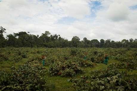 Propriedade rural no Estado do Amazonas 04/12/2012 REUTERS/Bruno Kelly