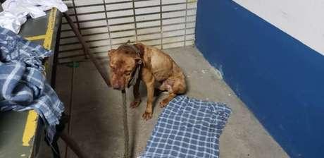 Cães eram induzidos a lutar até a morte por participantes de rinha em São Paulo.