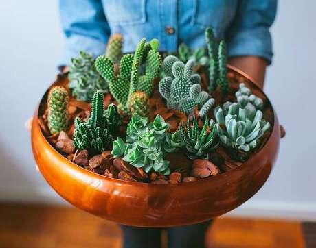 15. Forme um lindo vaso com cactos e suculentas. Fonte: Pinterest