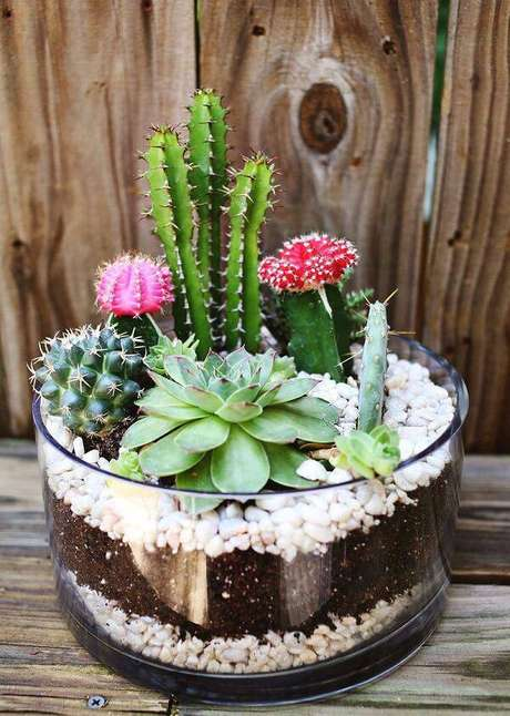 9. Cultive em um único vaso diferentes tipos de cactos e suculentas. Fonte: Pinterest