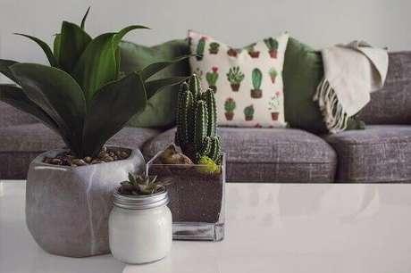 32. Cultive diferentes tipos de cactos na sala de estar. Fonte: Pinterest