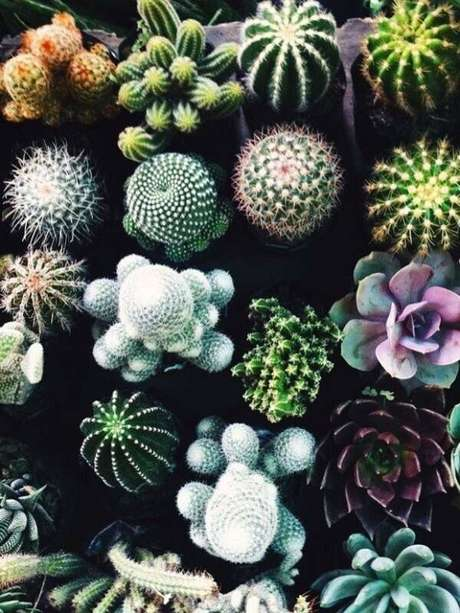17. Diferentes tipos de cactos que podem ser cultivados em casa. Fonte: Casa Vogue
