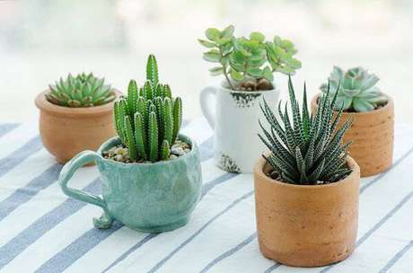 38. É possível cultivar diferentes tipos de cactos em xícaras e vasos de barro. Fonte: Leroy Merlin