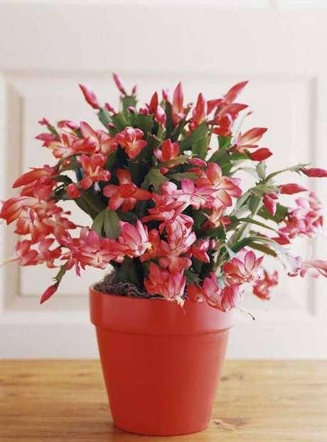 8. A flor de maio (Chlumbergera Truncata) é um dos tipos de cactos que dão flores. Fonte: Pinterest