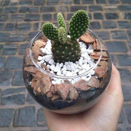 44. Cultive diferentes tipos de cactos em vaso transparente. Fonte: ELo7
