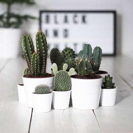6. Cultive diferentes tipos de mini cactos em casa. Fonte: Casa Vogue