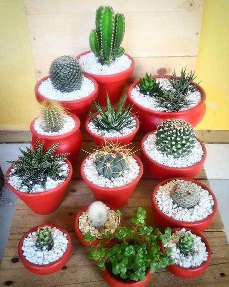 55. Invista em diferentes tipos de cactos para decorar a casa. Fonte: Pinterest
