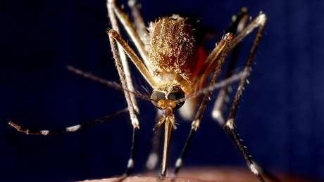 Malária já foi erradicada em 38 países e territórios do mundo, segundo a OMS