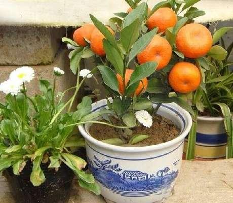 15. Cultive árvores frutíferas em vasos. Fonte: Pinterest