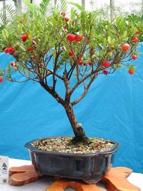 17. Você pode cultivar árvores frutíferas em vasos. Fonte: Mercado Livre