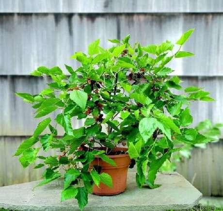 18. Cultive árvores frutíferas em vasos e se delicie. Fonte: Blog da Plantei