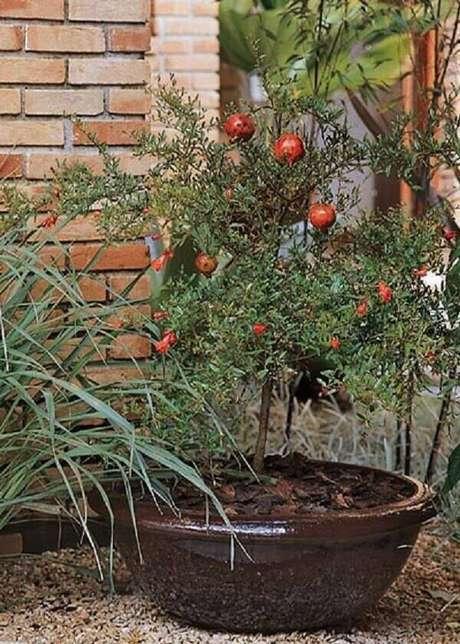 24. Algumas árvores frutíferas podem ser cultivadas em vaso, como a romã. Fonte: Cultura Mix