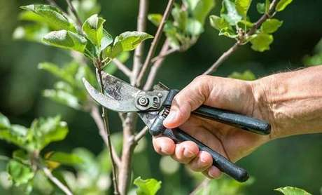 13. Como realizar a poda de arvores frutíferas sem danificá-las. Fonte: Master House