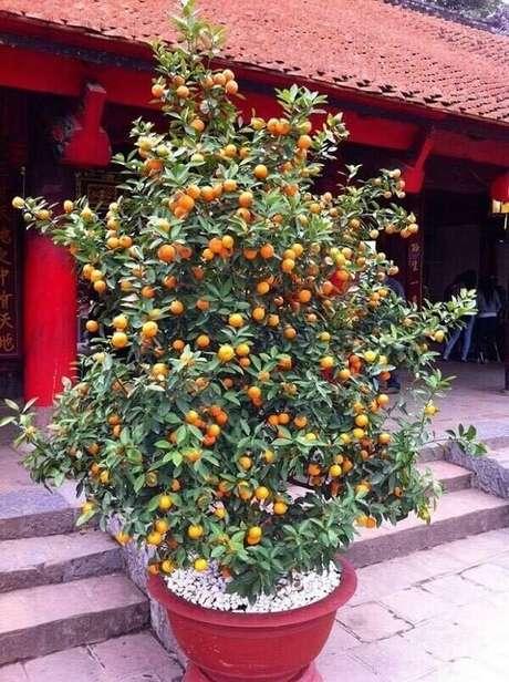 32. Posicione as árvores frutíferas na entrada da casa. Fonte: Pinterest