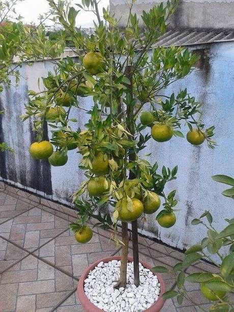 34. Aproveite o espaço do terraço e cultive árvores frutíferas. Fonte: Mercado livre