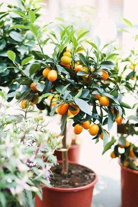 1. A laranjeira é uma das árvores frutíferas que pode ser cultivada em vaso. Fonte: Pinterest