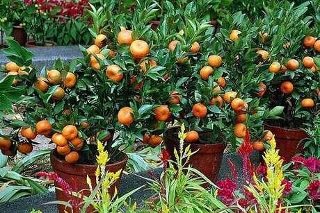 33. Cultive vários vasos com árvores frutíferas. Fonte: Pinterest