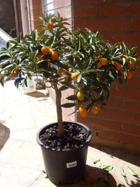 39. Aproveite a área externa do quintal para cultivar árvores frutíferas. Fonte: Habitíssimo