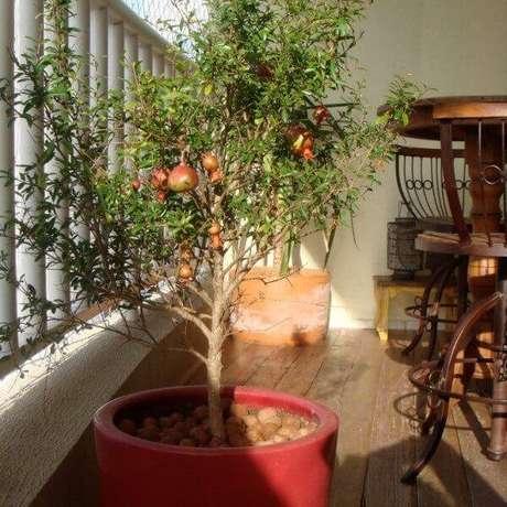 36. Cultive romã na varanda do apartamento. Fonte: Vaso e Cia