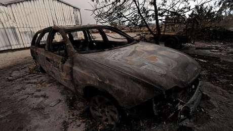 Impacto dos incêndios é devastador para humanos, mas ainda mais grave para a vida selvagem