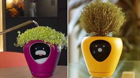 Uma cápsula que cultiva plantas e verduras