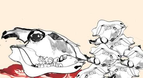 Ilustração de um crânio de uma vaca e vários outros ao lado