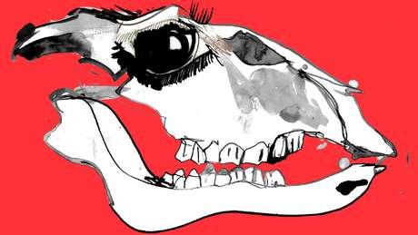Ilustração da caveira de uma vaca