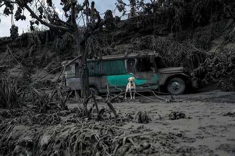 Cachorro em quintal coberto por cinzas do vulcão Taal, em Talisay, nas Filipinas 13/01/2020 REUTERS/Eloisa Lopez