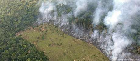 Floresta perdeu 9.165,6 quilômetros quadrados em 2019