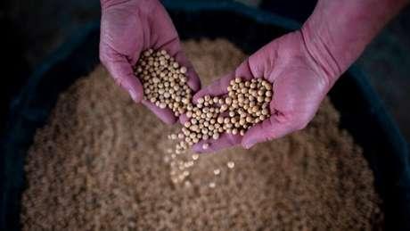 As exportações de produtos agrícolas dos EUA para a China, como a soja, caíram drasticamente devido à guerra comercial