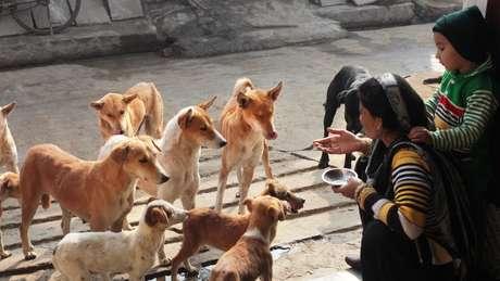 Alguns estudos já haviam mostrado que cães de estimação seguem gestos de humanos, mas será que o mesmo acontece com os que vivem nas ruas?