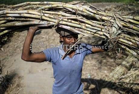 Trabalhador carrega um maço de cana na cabeça em uma fazenda perto de Modinagar, no Estado de Uttar Pradesh, na Índia 04/03/2016 REUTERS/Anindito Mukherjee