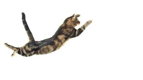 O modelo de Rademaker e Ter Braak revelou o movimento mais importante entre aqueles que fazem os gatos caírem em equilíbrio