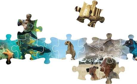 A ciência é geralmente como um quebra-cabeça: Paine encontrou a primeira peça