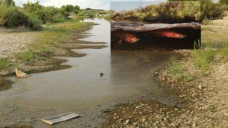 Veja a diferença que fez reintroduzir o salmão neste rio