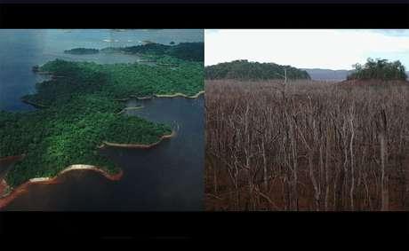 O que antes era uma bela floresta, alguns anos depois era pura devastação...