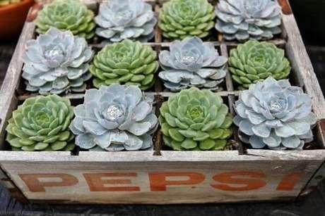 22. Engradado de refrigerante foi transformado em floreira de madeira para as suculentas. Fonte: Singing Gardens