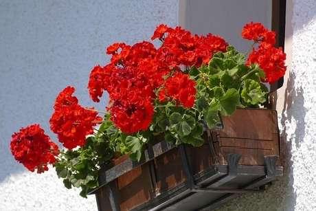 5. Floreira de madeira com gerânios. Fonte: Planta Sonya