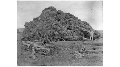 À direita, homem posa ao lado de coral arremessado pela erupção do Krakatoa sobre região de Anjer, na ilha de Java, em foto de cerca de 1885