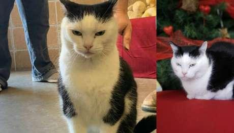 A felina Perdita foi chamada de 'pior gato do mundo'